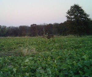 Performance Outdoors Illinois Hunting Outfitter