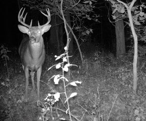 Illinois Hunting Outfitter Performance Outdoors